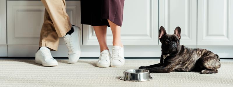 Como ter Pets em apartamentos: 6 dicas essenciais