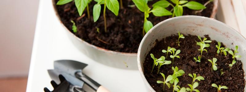 Como Cultivar uma Mini Horta na sua Cozinha